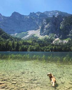 Uns geht schon sehr gut… Mountains, Nature, Travel, Pet Dogs, Naturaleza, Viajes, Destinations, Traveling, Trips