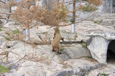 Korkeasaari Zoo in Helsinki, Finland. | qandvictoria.wordpress.com