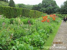Anglia czerwiec 2013 - strona 13 - Forum ogrodnicze - Ogrodowisko