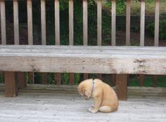 Poor puppy. #Cuters.