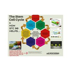 Cell Cycle, Plant Stem, Stem Cells, Vr, Wealth, Wellness, Activities, Fruit, Lifestyle