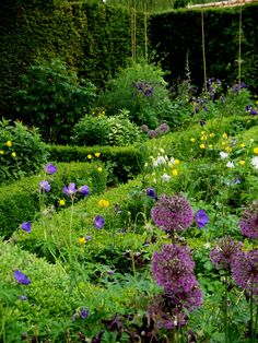 Blue #geraniums, yellow #welshpoppies and purple #ornamentalonions what's not to love ? #Chisenburypriory  #boxhedging