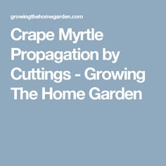 Crape Myrtle Propagation by Cuttings - Growing The Home Garden