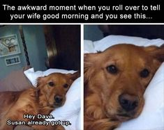 Morning Funny Picture Dump 36 Pics