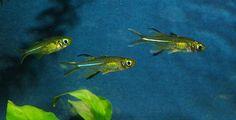 Tropical Fish Hobbyist's photo.