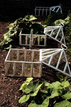 Perhaps a few of these built with chicken wire instead of glass to allow young plants to flourish in the presence of hungry hens...