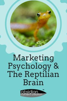 Marketing Psychology and the Reptilian Brain - Us humans always think we're such logical creatures, but this is not the case at all. We feel emotion, we make snap decisions, we make mistakes and we have regrets. Let's investigate how our psychological makeup affects our buying behaviour. #marketing #behaviour #advertising #psychology #marketingpsychology #behaviouralpsychology #copywriting #design #jeniilowe #obsidiancontent #blog #blogging