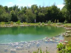 Natural Swimming Pond Chalfont St Giles, Bucks 5