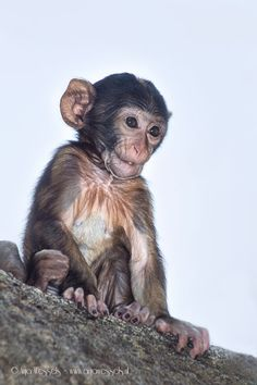 Google+ Cute Monkey, Orangutan, Primates, Garden Sculpture, Creatures, Monkeys, Funny, Baby, Animals