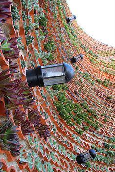 TERRA PRETA = Paisagismo+Projetos+Manutenção de Jardins: Junho 2012