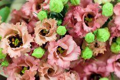 Pink frilly petalled lisianthus (Falda salmon) at New Covent Garden Flower Market - November 2014