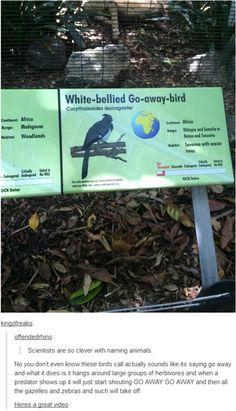 Tumblr Has a New Favorite Bird