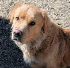 Adoptable Dog: Ziggy