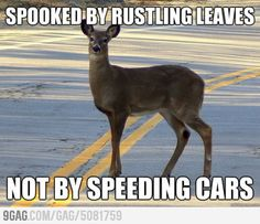 I have never understood deer logic but so true. Lol