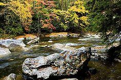 Cranberry River, Monongahela National Forest, WV (c) Thomas R. Fletcher # D-06-2371