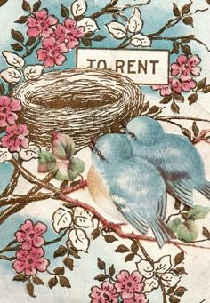 bluebirds looking for a place to rent