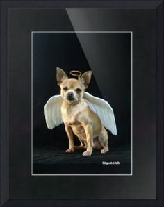 """""""Timmy the Chihuahua is a Christmas Angel"""" by T.J. Morgan, Texas Hill Country // Timmy the Chihuahua was a rescue who has endeared himself to everyone he meets.  He has been able to visit elementary schools and nursing homes and brings smiles to faces young and old.  Timmy does not know a stranger!  A loveable little guy, he is a part of our family and a... // Imagekind.com -- Buy stunning fine art prints, framed prints and canvas prints directly from independent working artists and ..."""