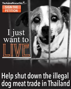 Help shut down the illegal dog meat trade in Thailand! Sign the petition today!! - #TheAnimalRescueSite