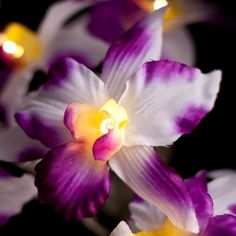 Orchid Fairy Lights White with Purple 20 LED, http://www.amazon.co.uk/dp/B008UU1XXU/ref=cm_sw_r_pi_awd_RbVqsb1MAFYZR
