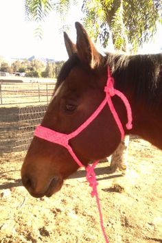 Ky Hash on Facebook makes these. Absolutely in love with these halters!!