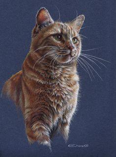 Cat Portrait by EsthervanHulsen.deviantart.com on @deviantART Animal Paintings, Animal Drawings, Pencil Drawings, Cat Drawing, Painting & Drawing, Drawing Ideas, Vida Animal, Polychromos, Color Pencil Art