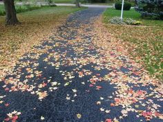 Eco Friendly Fall Clean-Up