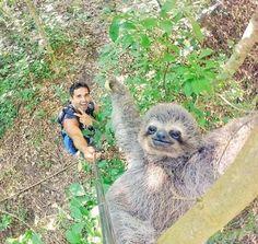 Sloth selfie   http://ift.tt/2fsGSK6 via /r/funny http://ift.tt/2g5g29g  funny pictures