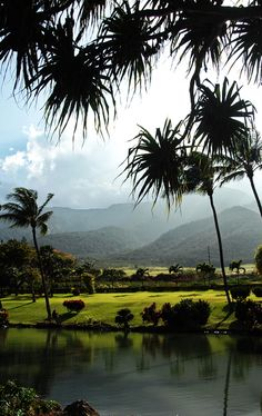 Tropical vegetation (Botanic Gardens) Maui, Hawaii