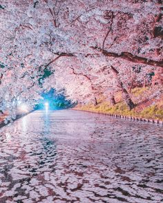 Prepare for a cold trip up north where some of Japan's best cherry blossom spots are! Discover Hirosaki Park in Aomori and catch the sakura… Beautiful World, Beautiful Gardens, Beautiful Places, Beautiful Pictures, Beautiful Nature Wallpaper, Beautiful Landscapes, Natur Wallpaper, Landscape Photography, Nature Photography