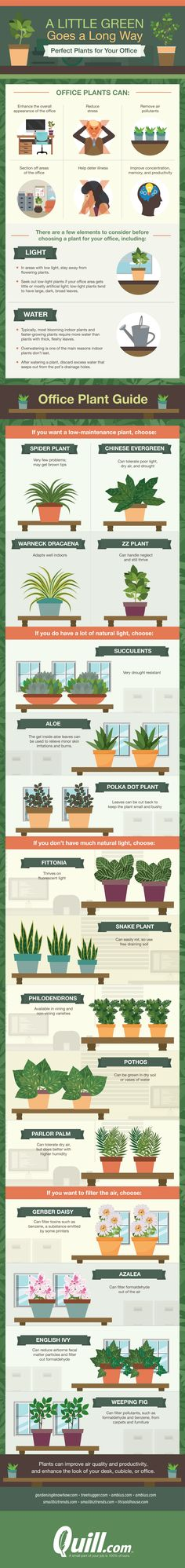 A Little Green Goes a Long Way: Plants Perfect For Your Office #Infographic #Workplace