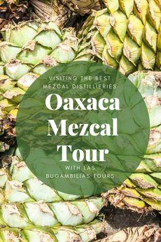 oaxaca mezcal guide