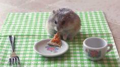 Resultado de imagen para imagenes de hamsters graciosos