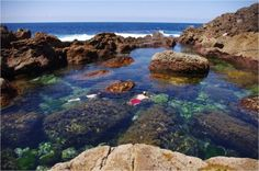 Tidal Pools at Poor Knights Islands, New Zealand. Image: Colin Miskelly, Te Papa