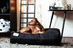 We are pretty excited to be one of the first shops to stock these beautiful modern dog beds and accessories by Scandi-inspired brand, Vackertass Supply Co - take a peak here: http://www.styletails.com/2016/05/03/whats-hot-modern-dog-beds-and-collars-from-vackertass-supply-co/