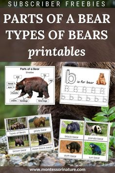 Parts of a Bear poster Parts of a Bear label cards and blank poster Blackline master 'b' is for bear pre-writing tracing worksheet Types of Bears 3 part cards Sloth Bear, Panda Bear, Asian Black Bear, Blank Poster, Bear Ears, Tracing Worksheets, Pre Writing, Montessori, Free Printables