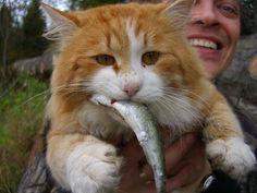 коты на рыбалке - YouTube