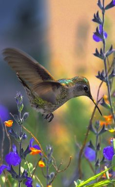 Sweet Iridescence • digital art painting: Fli Art on FineArtAmerica I LOVE hummingbirds! ✌️