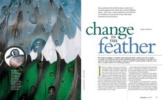 like the layout of the title and text how it all relates together. Close up image of the feathers and water great too.    Magazine page spread for an article on the moulting phase of waterfowl. Typefaces used in the design are Bembo and Myriad Pro. topdesignmag.com