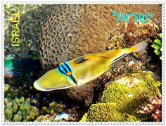 Eilat coral reef Photo
