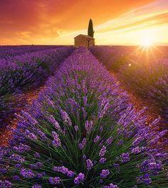Exquis! Champs de lavande. Provence, France.  @beboy