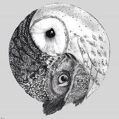 Owl Tao
