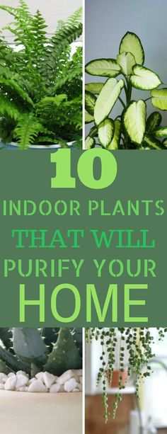 A great find. Indoor plants that look good and will help to purify the air. Definitely pinning. #indoorplants #diy #homedecor #indoorplants