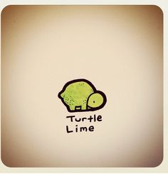 Turtle lime