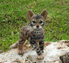 Bengual kitten