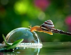 What happens if I push it? The intrigued snail gently touches the surface of the glistening bubble