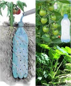 Container Gardening, Gardening Tips, Organic Gardening, Kitchen Gardening, Gardening Services, Urban Gardening, Small Patio Ideas On A Budget, Bottle Garden, Vegetable Garden Design