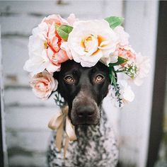 You can't tell me you wouldn't have shared a picture of a dog in a flower crown, too.  Image by @allisonwolfphoto  Featured by @clarebarkerwells  Tagged #thelifestylecollective