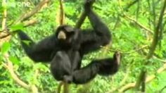 BEST OF Funny Talking Animals - Walk on the Wild Side, via YouTube.