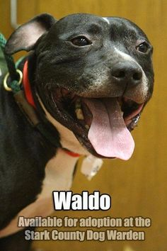 Adopt A Dog Dublin Ohio