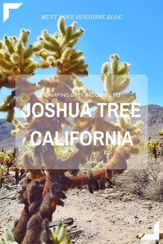 Camping & Hiking guide to Joshua Tree, CA || Must Love Sunshine Blog https://mustlovesunshine.wordpress.com/2016/04/29/joshua-tree-a-first-time-guide/